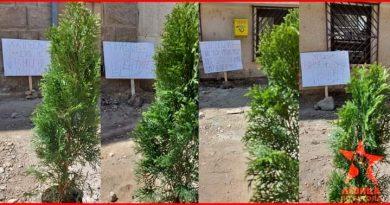 """Левица – ЛО Битола засади дрвца на местото на уништениот дрворед на """"Рузвелтова"""""""
